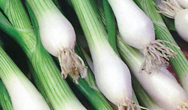 Spring onion 2