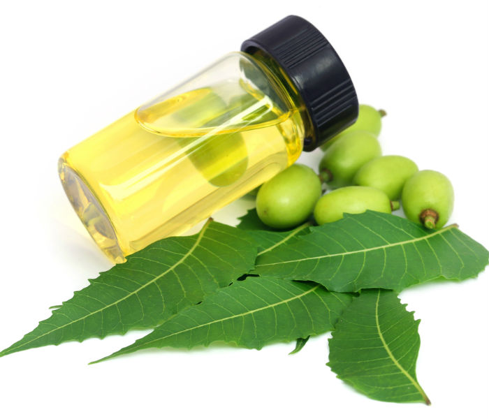 Neem as contraceptive