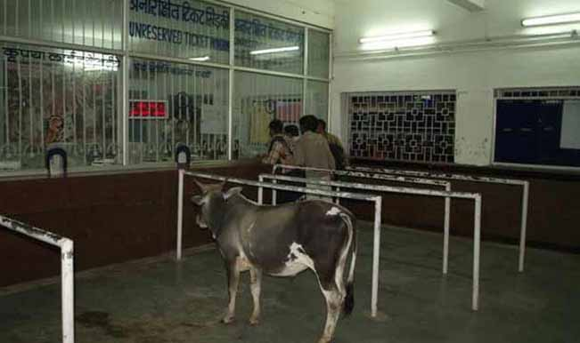 I know of people who often travel without a ticket but it seems cattle follow rules better than human beings