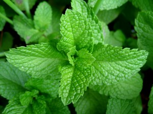 Mint-Leaves-300x225