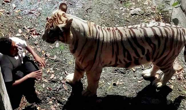 Delhi zoo case: Family of 20-year-old killed by white tiger wants justice