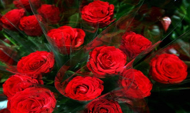 Happy Valentine S Day 7 Flowers You Can Gift To Your Valentine