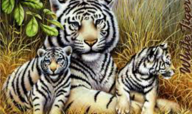 national tiger day
