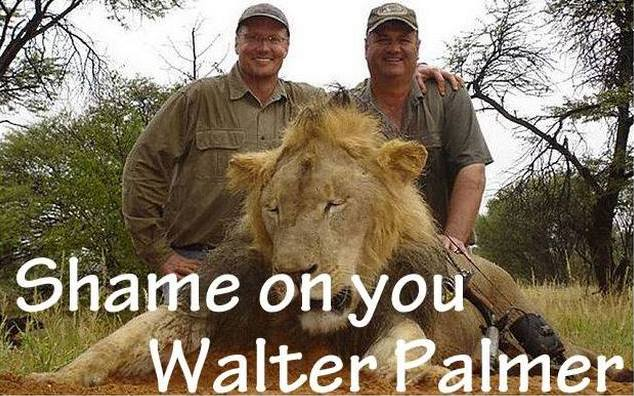 Cecil The Lion killed by American Dentist Walter Palmer!