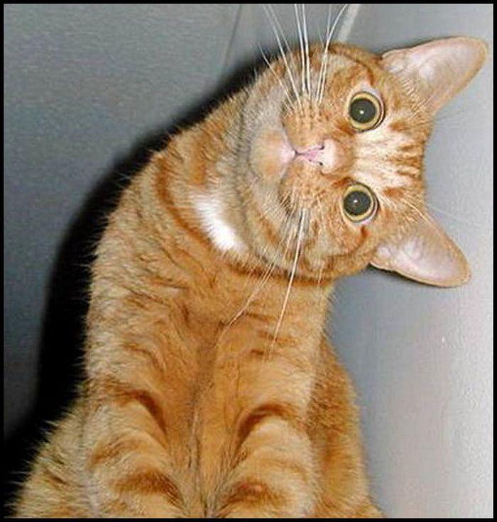 Bildergebnis für cat turn head