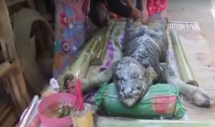 Weird! Half Buffalo-Half Crocodile found in Thailand! Is ...