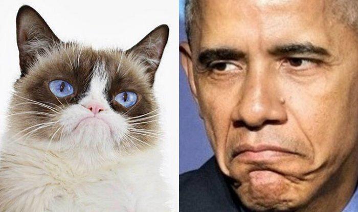 grumpy cat and barack obama
