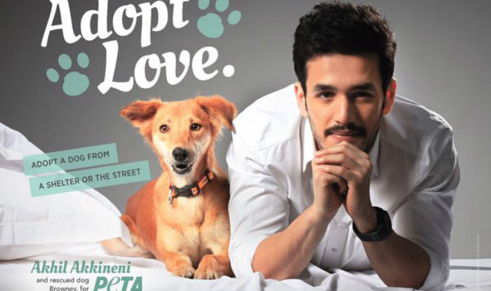 I Want To Adopt A Dog For Free In India