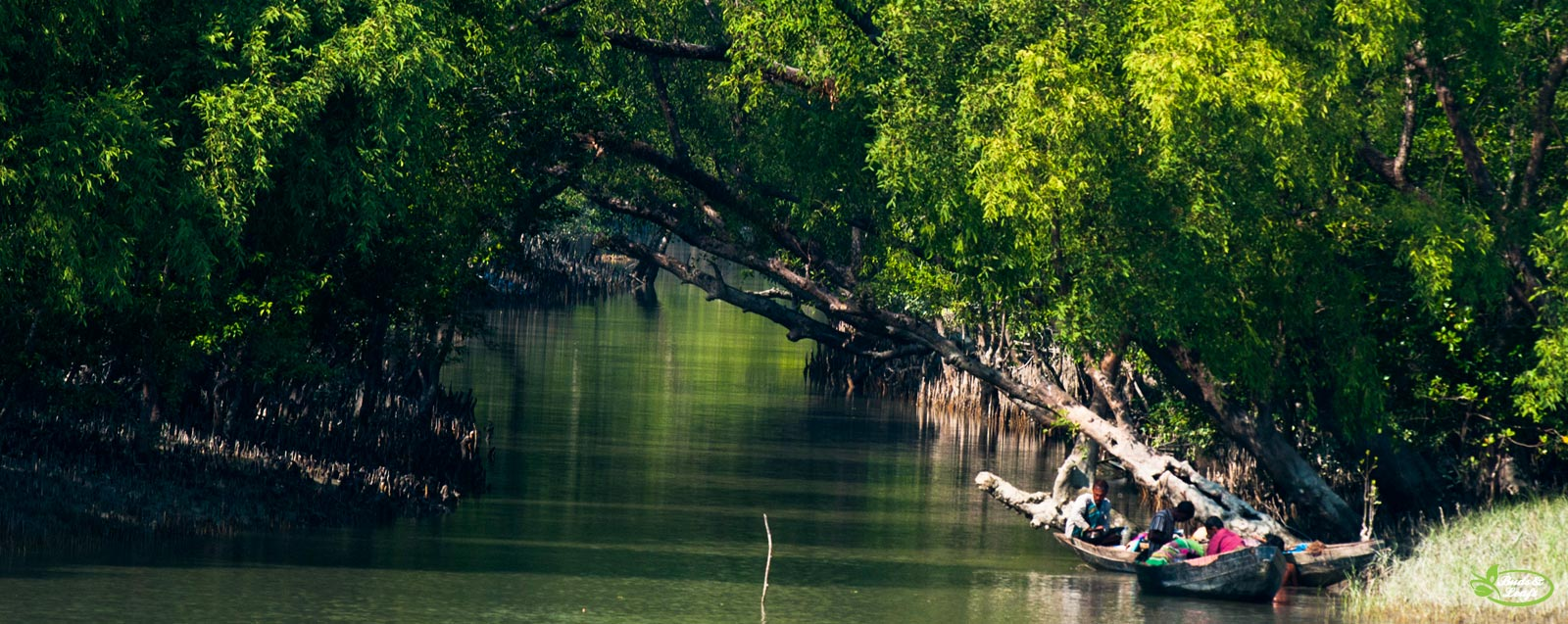 thesis on sundarbans Biodiversity and its conservation in the sundarban mangrove ecosystem (gopal and conservation in the sundarban sundarbans master in marine affairs thesis.