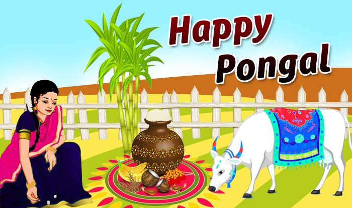 Pongal 2017: Importance and Significance of the 4 day ...
