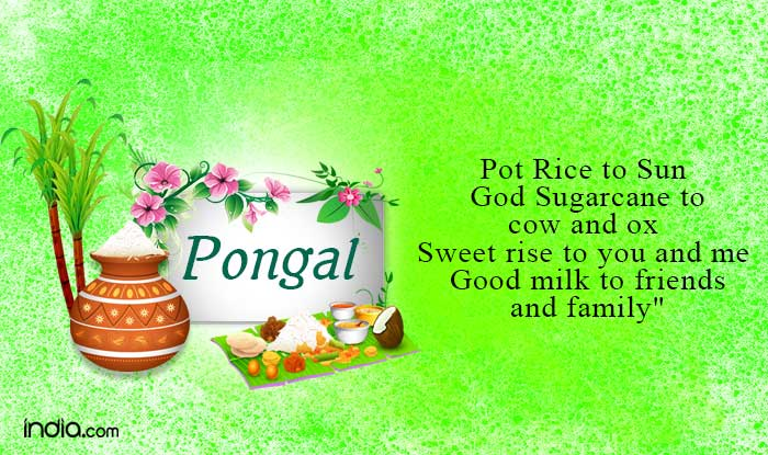 Pongal 2017 happy pongal wishes whatsapp status facebook messages pongal 2017 happy pongal wishes whatsapp status facebook messages sms gif images dp to share on this pongal 2017 buzz news india m4hsunfo