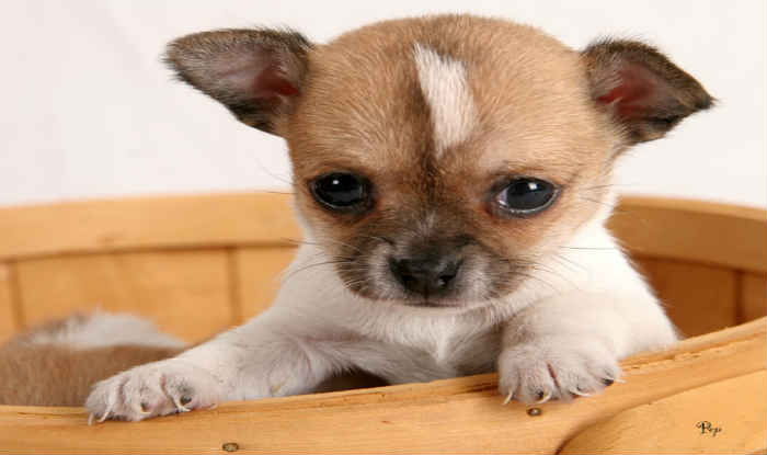 Disallow Advertisements For Sale Of Dogs On Olx Quikr