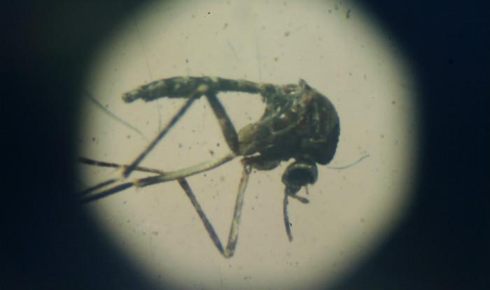 zika-virus1