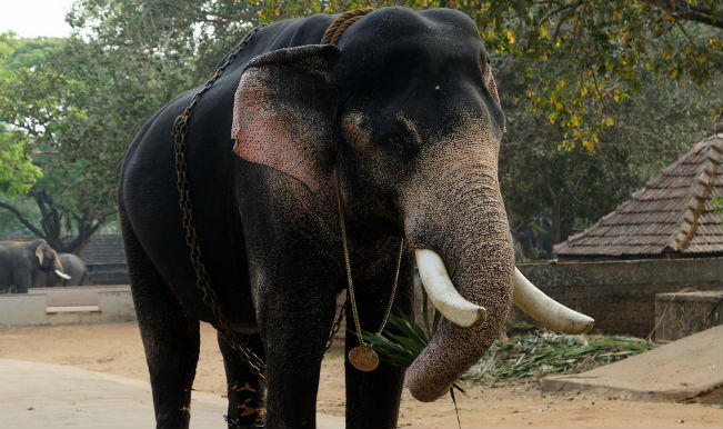Don't issue ownership certificates to elephant owners ...