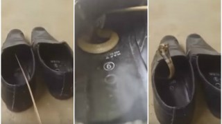 OMG! There was a snake hiding inside this man's shoes! This is why you must be careful before wearing shoes!
