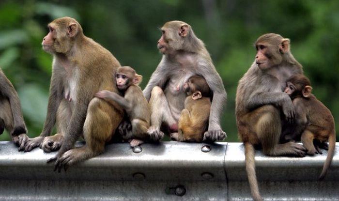 Actions Monkey Island