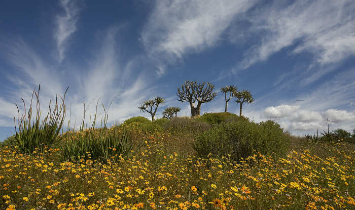 Cape Floral Region1
