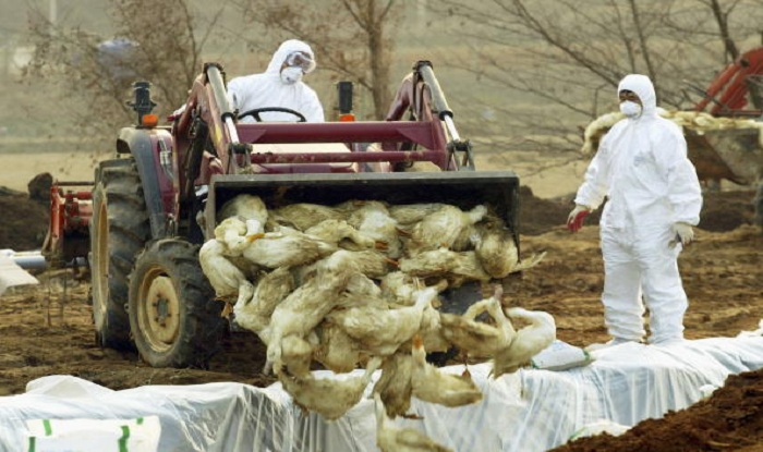 Saudi Arabia Bans Poultry Import From India After Bird Flu Reports