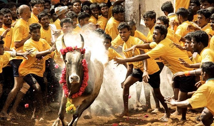 Jalikattu protest updates: Schools and colleges to remain closed in Chennai - India.com