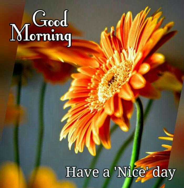 good morning ki video whatsapp download