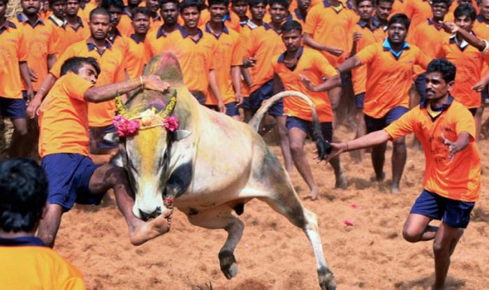 CM रहेंगे मौजूद तमिलनाडु में आज होगा जल्लीकट्टू