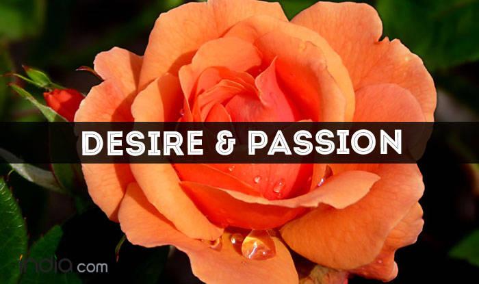 orange color rose meaning