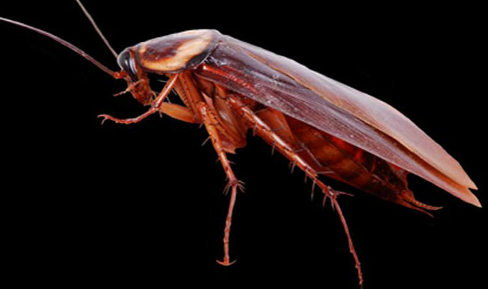 how to kill all cockroaches in house