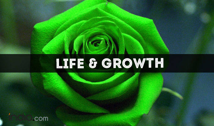 life-and-growth Green Rose
