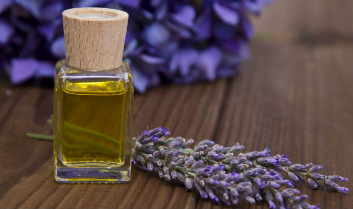 lavender oil india