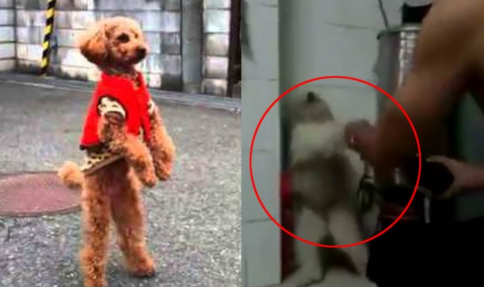 Dog walking on hind legs go viral, here is why you should ...