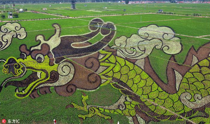 China Rice Paddies dragon