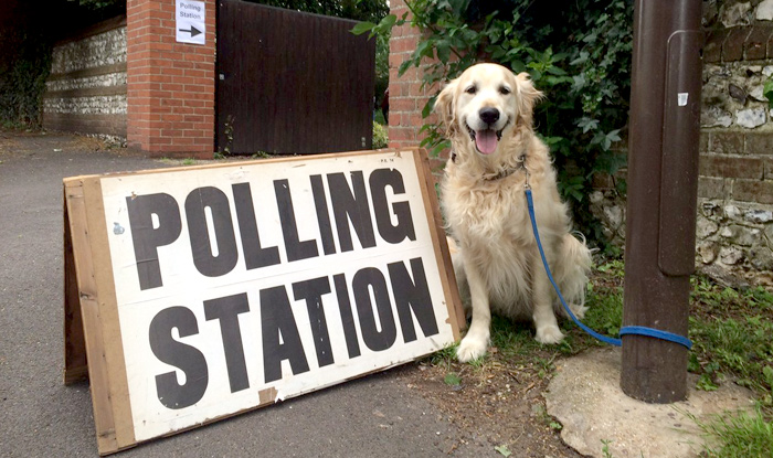 DogsAtPollingStations: Adorable animals waiting outside polling stations as  human's vote become UK election trend (See Pictures) | India.com
