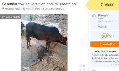 Cows up for sale on OLX after Centre's ban on sale of cows for