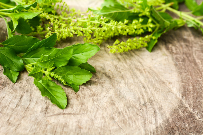 Indian Medicinal Plants 5 Medicinal Herbs You Must Plant In Your Kitchen Garden Lifestyle