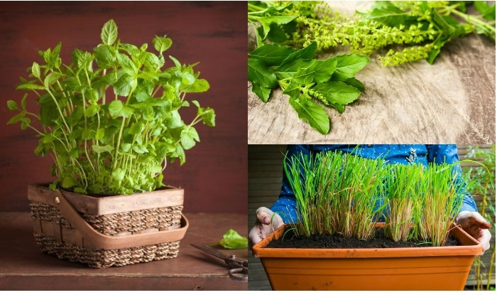 Indian Medicinal Plants 5 Medicinal Herbs You Must Plant In Your