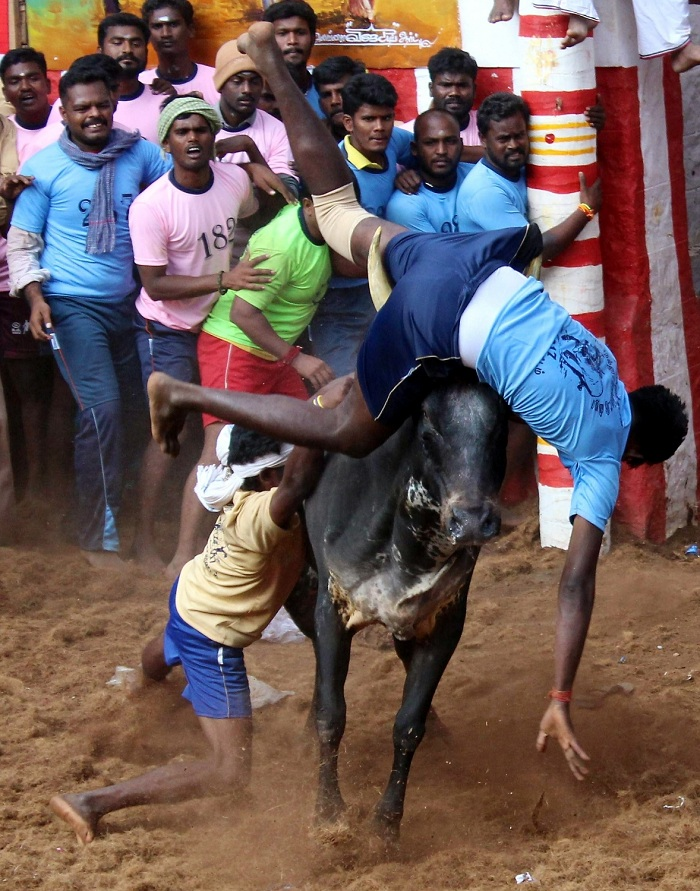 19-yr-old dies, 28 injured during Jallikattu in Tamil Nadu