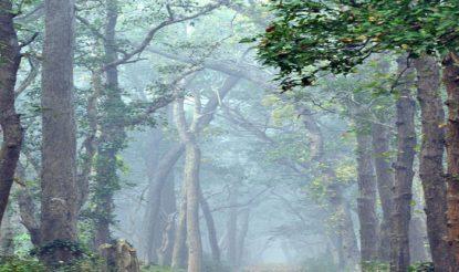 फिल्म निर्माण के लिए दुधवा नेशनल पार्क भी है खूबसूरत जगह. (फोटो साभारः फिल्मबंधुयूपी.कॉम)