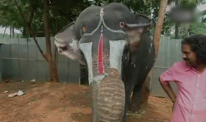 Elephant Plays Mouth Organ in Coimbatore, Adorable Video ...