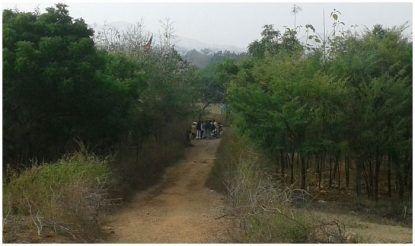 भैयाराम ने 50 हेक्टेयर बंजर जमीन को हरा भरा बना दिया.