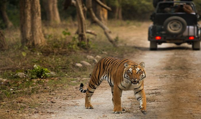 Time to Visit Jim Corbett National Park This New Year