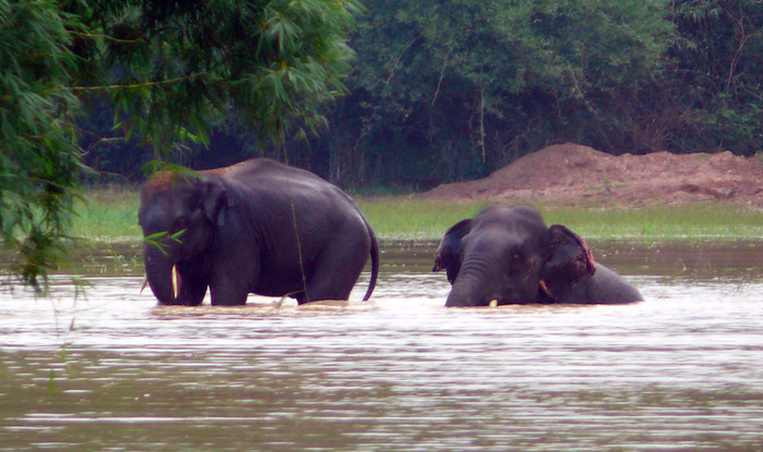 To Observe Elephants in Their Natural Habitat, Head to Chandaka Elephant Sanctuary