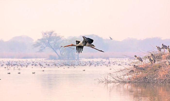 Give Taj Mahal a Break And Visit Keoladeo Ghana National Park Near Agra