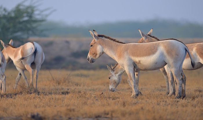 Rann of Kutch: Top 5 National Parks And Wildlife Sanctuaries