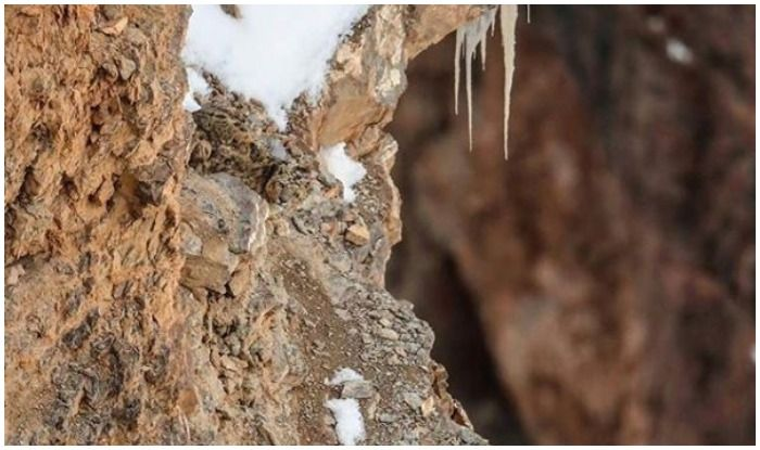 This Viral Picture of Snow Leopard is Completely Baffling The Internet; Can You Spot Where is he in This Photo?