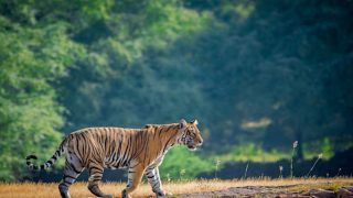 Top Wildlife Parks to Visit in India During Monsoons
