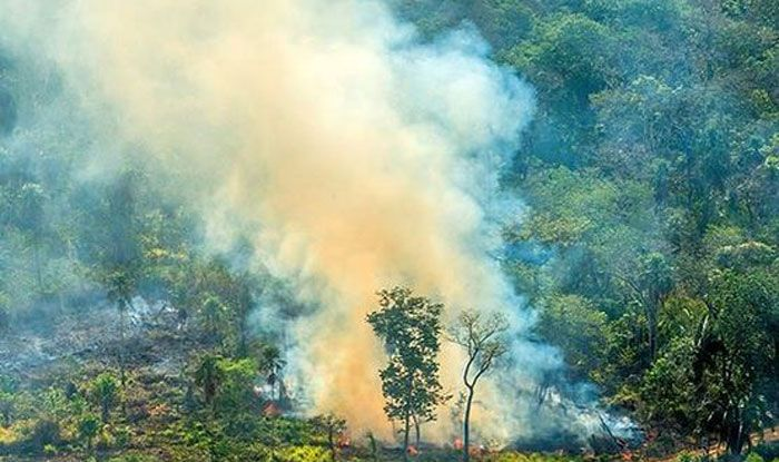 How Amazon Deforestation Can Lead to Spread of New Diseases Like Arbovirus - India.com