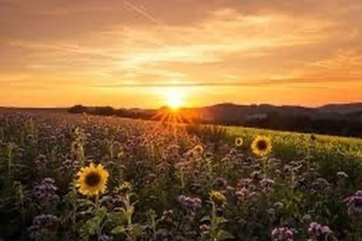 Summer Solstice 2020 All You Need To Know About The Longest Day Of The Year