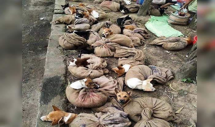New Delhi: The commercial import and trade of dog meat – cooked and uncooked – and dog markets has been banned in Nagaland, the state government i