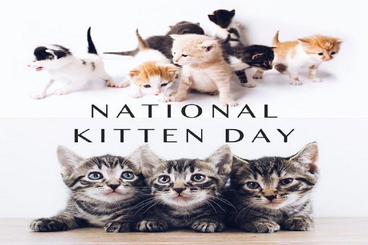 National Kitten Day 2020 History Significance Of The Day And How It Is Celebrated