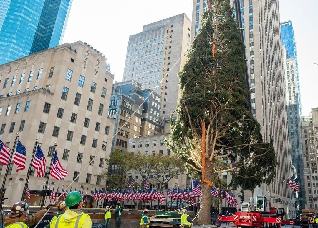 New York City's 75-foot-tall Rockefeller Center Christmas Tree Goes Up